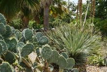 Growing Succulent Garden In Sa...