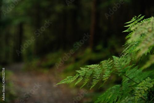 Foto auf Gartenposter Straße im Wald Path in dark forest