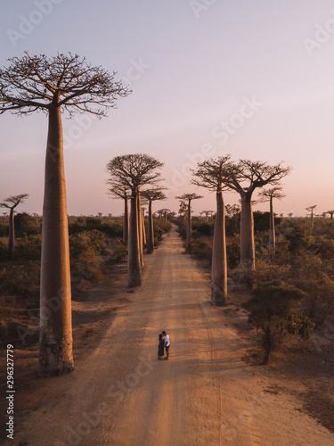 Canvas Avenue of baobabs, Madagascar