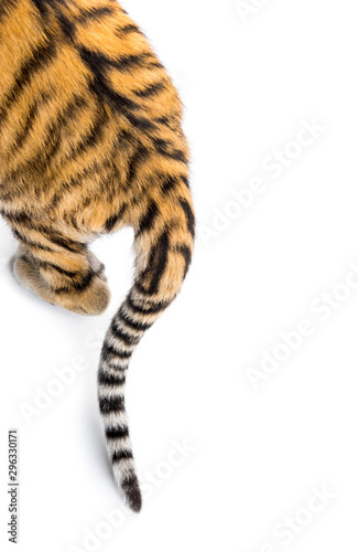 Foto op Canvas Tijger Close up of two months old tiger cubs tail, isolated on white