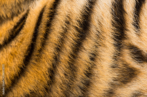 Foto Close up of two months old tiger cubs fur