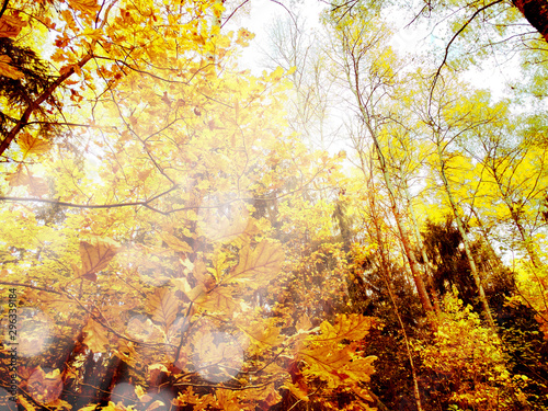 Foto auf Gartenposter Gelb autumn landscape forest with yellow red leaves with sunny light beams