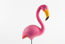 Pink Flamingo On A Pink Backgr...
