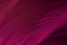 Beautiful Dark Magenta Feather Pattern  Texture Background