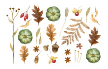 Autumn Watercolor Leaves Isolated On White Background. Tulip Tree, Oak, Maple, Ash, Birch,beech, Grapes Decorative Set. Leaf Fall Elements For Thanksgiving, Halloween And Autumn Holidays Design.