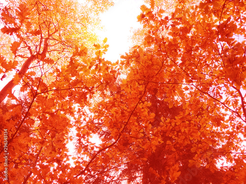 Garden Poster Red autumn landscape forest with yellow red leaves with sunny light beams