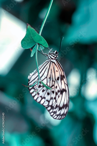 Fotografie, Obraz  Beautiful butterfly sitting on flower in a summer garden