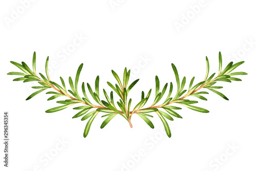 Fotografía  Isolated watercolor vignette with fresh rosemary
