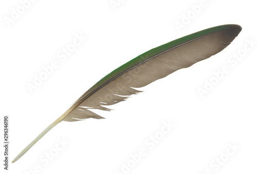 Beautiful green macaw parrot lovebird feather isolated on white background Wallpaper Mural