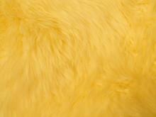 Closeup Golden, Yellow Fluffy ...