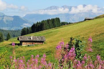 Chalet au milieu d'un pâturage de Savoie, Les Saisies, Savoie, France