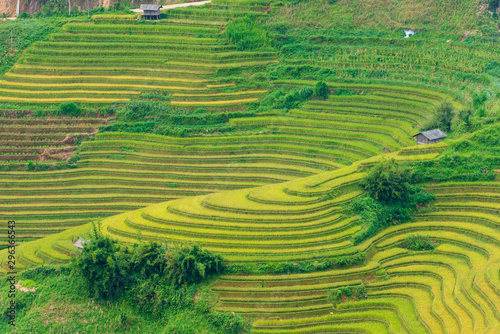 Fotobehang Rijstvelden The rice terraces heritage on the majestic mountains range and deep valley with ripe yellow rice field and colorful dramatic layout
