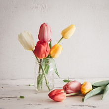 Front View Of Colorful Tulips