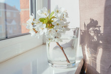 White Blooming Flowers In Glass Vase On†windowsill