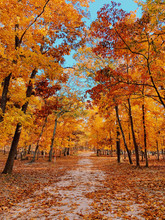 Scenic View Of Row Of Autumn T...