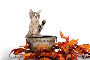 Kittwn in fall wecome bucket