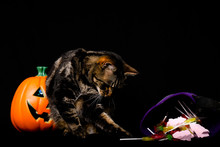A Tabby And White Cat With Green Eyes Standing Next To A Jack O Lantern And Halloween Candy Against A Black Background