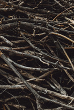 Close Up Of Broken Branches