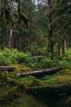 Mossy Fallen Trees In Pine Forest