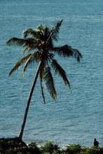 View Of Palm Tree Against Sea