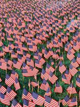 Field Of Miniature American Fl...