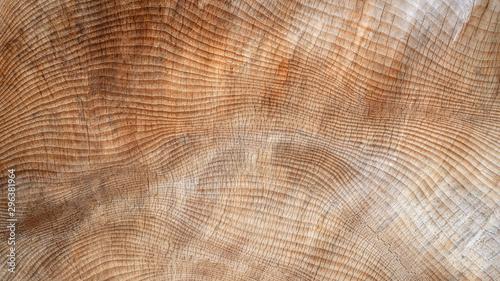 Abstrakte, leicht rissige Struktur im Holz eines sehr dicken Baumstamms Canvas Print