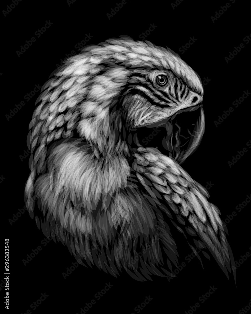 Fototapeta Macaw parrot. Hand-drawn, sketchy, art portrait of a macaw parrot on a black background.