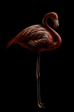 Pink Flamingo. Hand-drawn, Artistic, Flowered Image Of A Flamingo Bird On A Black Background.