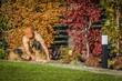 Leinwandbild Motiv Fall Season Garden Works