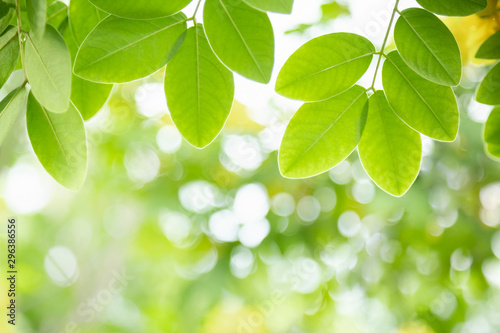 fototapeta na lodówkę Close up of nature view green leaf on blurred greenery background under sunlight with bokeh and copy space using as background natural plants landscape, ecology wallpaper concept.