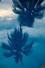 Reflection Of Palm Tree And Cl...