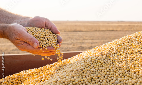 Photo Hands of peasant holding soy beans