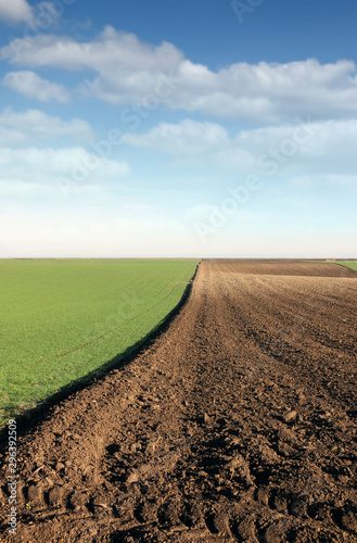 Photo plowed field and young green wheat autumn landscape agriculture