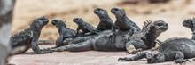 Galapagos Funny Animals - Mari...