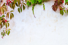 White Garden Wall Background
