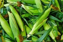 Fresh Corn In Its Husk At A Fa...