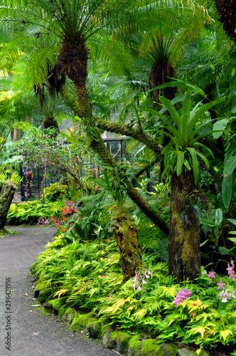 Curving Tropical Garden Path