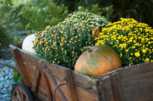 Closeup Of Decorative Pumpkins...
