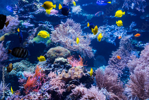 Poster Coral reefs beautiful underwater world with tropical fish