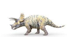 Triceratops Is Walking On White Background
