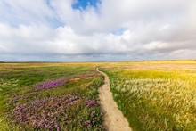 Beautiful Shot Of A Narrow Pathway In The Middle Of The Grassy Field With Flowers Under A Cloudy Sky