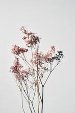 Dried Wild Flowers On White Ta...