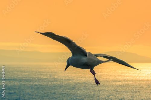 Photo  Seagull flying flight wings aerial view sea Atlantic Ireland