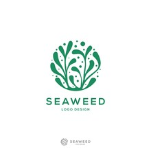 Modern And Minimalis Seaweed L...
