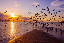 Birds On The Beach At Sunset
