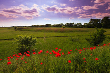 Beautiful Pastoral Scenery In Early Summer, With Wild Red Poppy Flowers Along Old Railroad Track