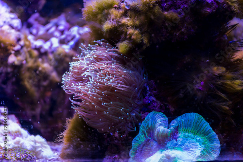 Marine ecosystem background on a coral reef