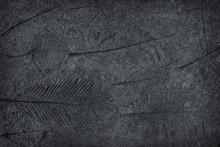 Leaf Print Or Stamp Of Leaf  On Black Stone