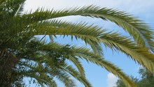 Palm Branches Against Blue Sky