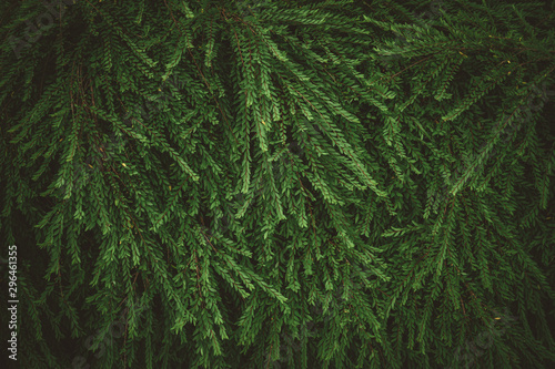 Autocollant pour porte Fleur Tropical nature green leaf texture abstract background.